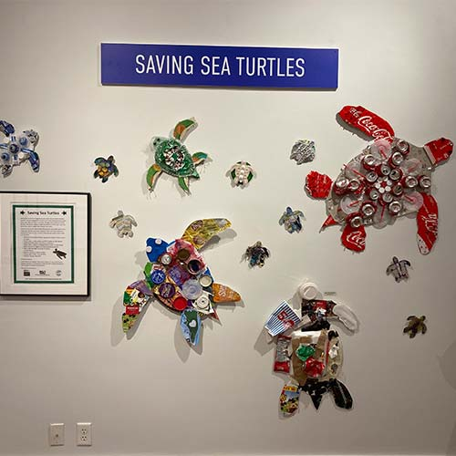 SAVING_SEA_TURTLES